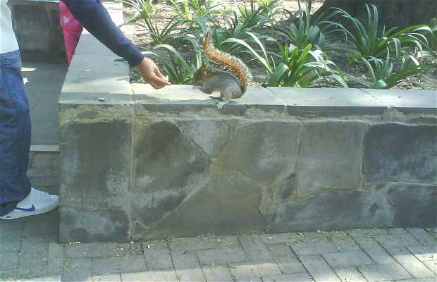 Zoolojico Chapultepec