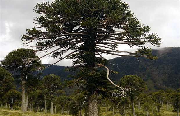 Reserva Nacional Malalcahuello-Nalcas
