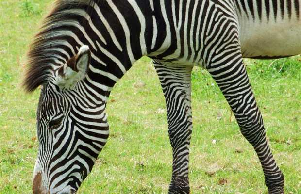 Zoo de Chester
