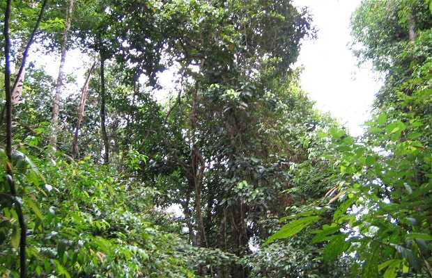 Bosques Húmedos Gondwana