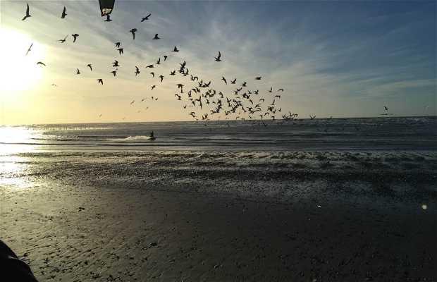 Playa del touquet