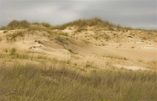 Dunes of Corrubedo