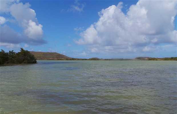 Etang des salines Martinica