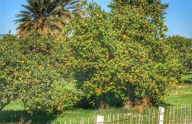 Huerta de Naranjas del Valle de San Luis