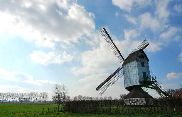 Hogewegmolen Noorderwijk