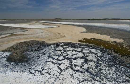 Lagunas de El Longar, Altillo Grande y Altillo Chica Natural Reserver