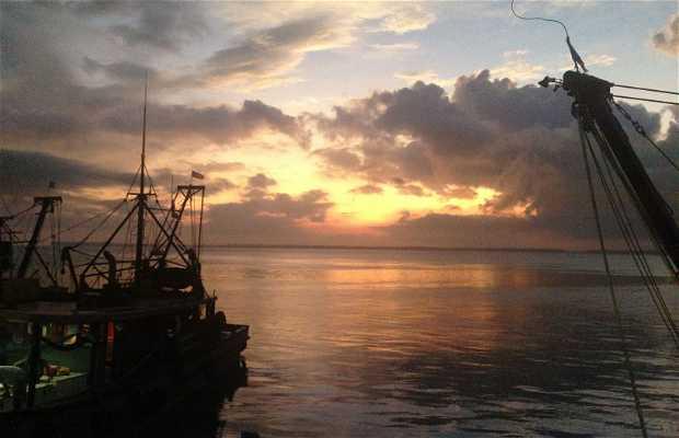 Lonja y Puerto de Pescadores