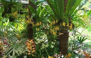 Jardin des orchidées