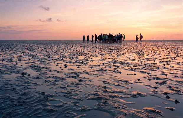 Parque Nacional del Mar de Frisia