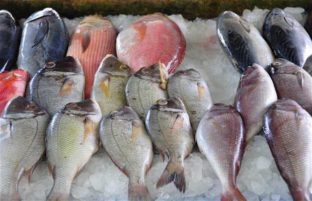 Puestos de pescado en Fort Kochi