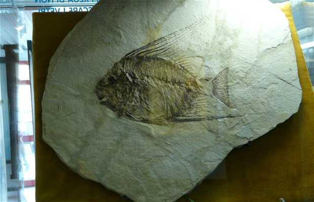 Museo de los Fósiles de Bolca