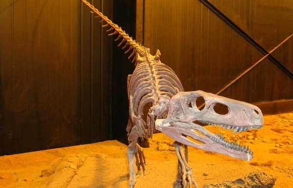 Musée paléontologique