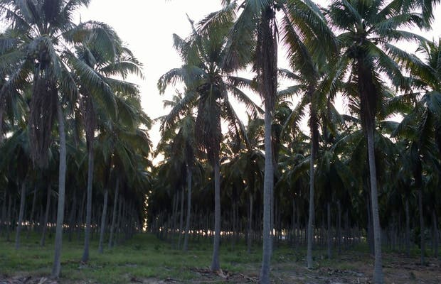 Vale do Coco