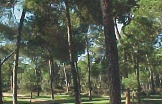 Protected Landscape Corredor Verde del Guadiamar