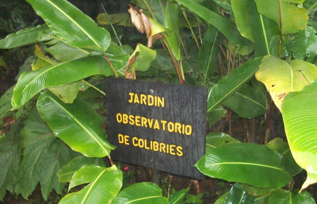 Jardin observatorio de colibries