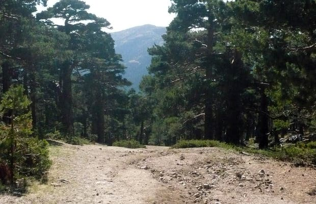 Schmid path