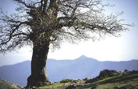 Tolox: Ventana Abierta A La Sierra De Las Nieves