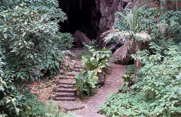 Parque nacional El Guácharo Monagas
