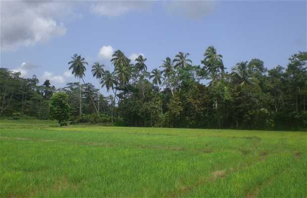 Paseo por Koggala