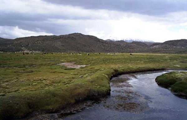 Bofedales de Parinacota