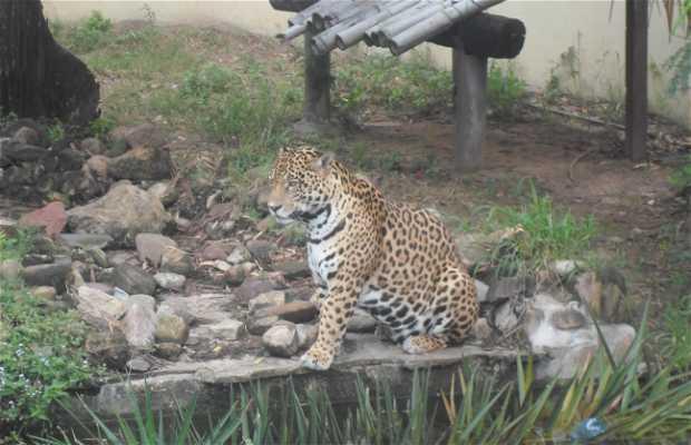 Zoologico Santa Cruz de la Sierra, Bolivia