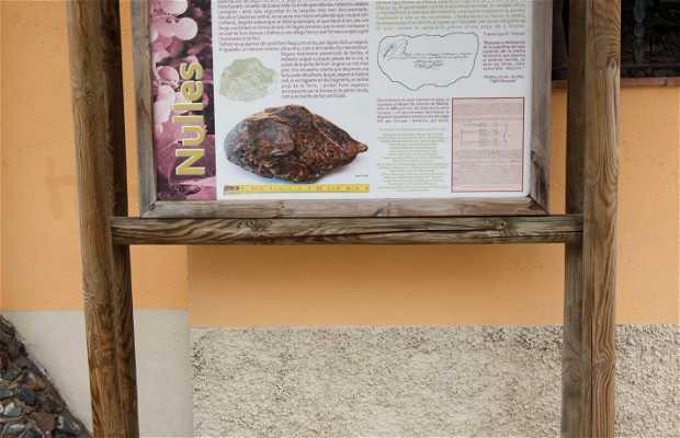 El Meteorit