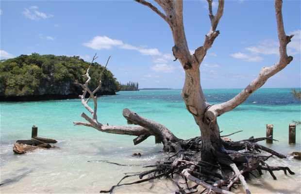 Island of Pines
