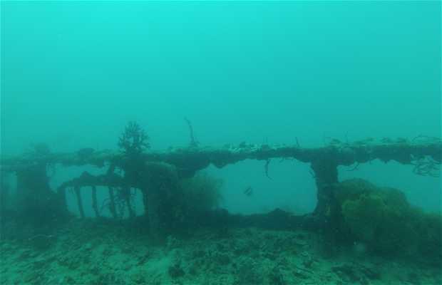 L'épave Olympia Maru