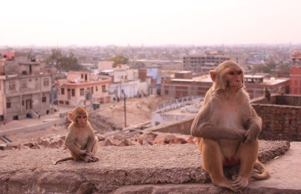 Jaipur Monkey Temple (Galta Ji)