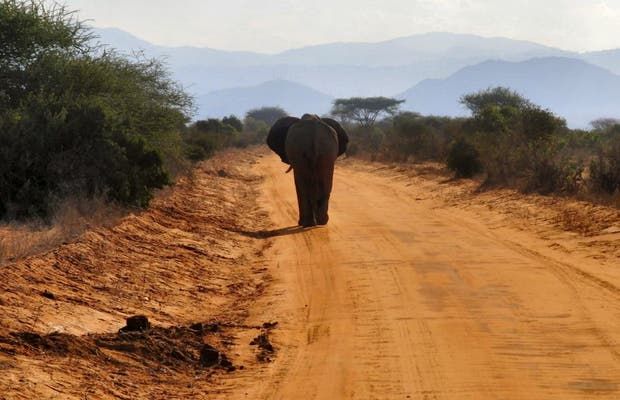 Parque Nacional Tsavo East