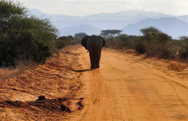 Réserve de Tsavo Est au Kenya