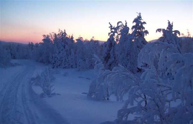 Parque Pyhä-Luosto