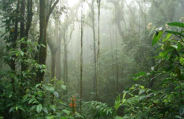 Riserva forestale 'Bosco nuvoloso' di Santa Elena