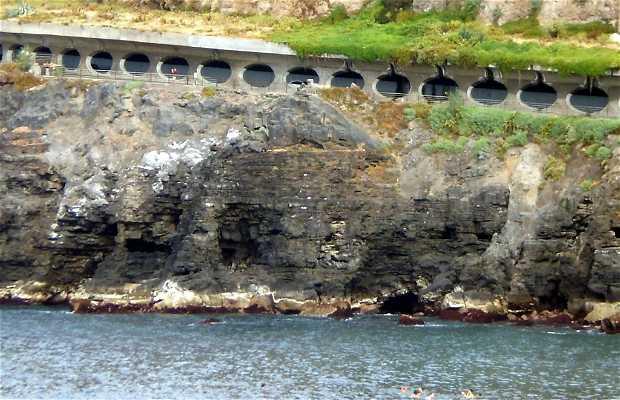 Martiánez hillside and cliffs