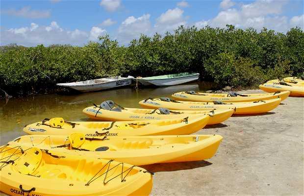 Mangrove Info & Kayak Center Bonaire