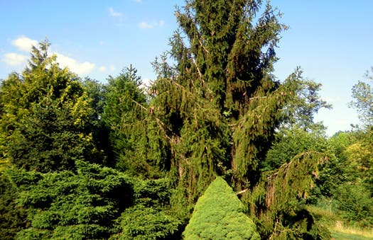 Jardin botanico del Montet