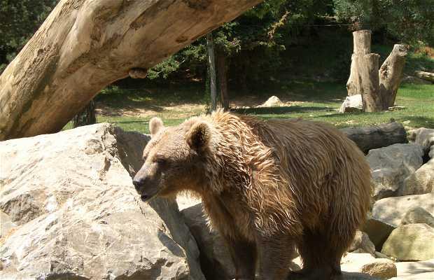 La Colline aux marmottes