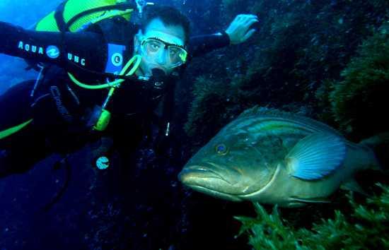 Balkysub Diving School