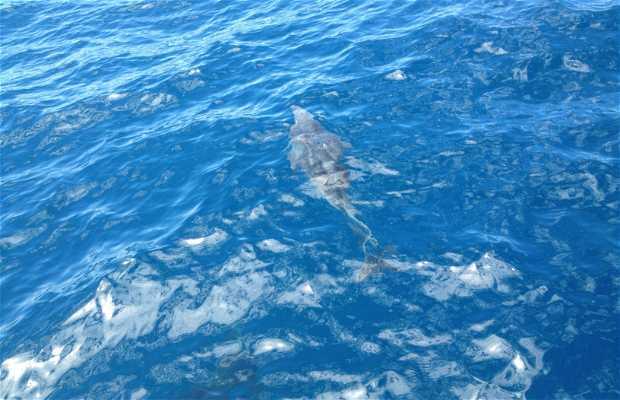 Spirit of the Sea. Avistamiento de delfines y ballenas