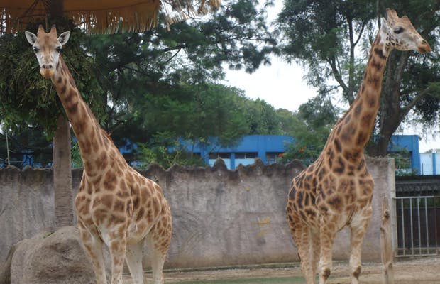 Zoológico Nacional La Aurora