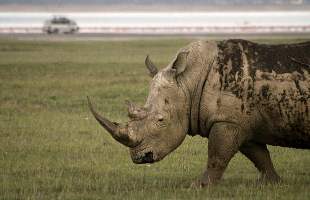 Safari nel Masai Mara National Reserve