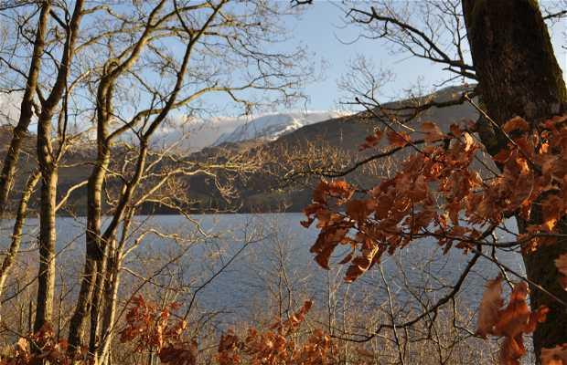 Lago Earn