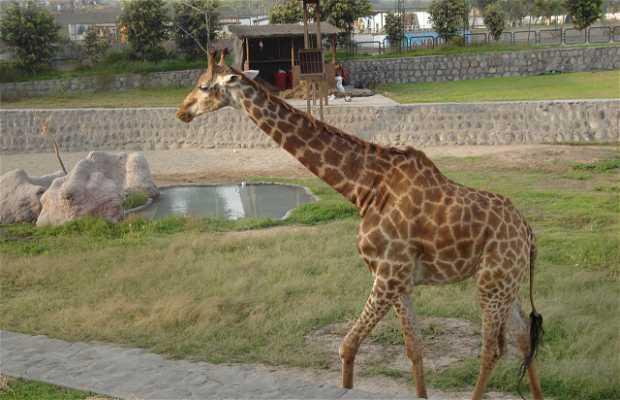 Zoologico de Huachipa