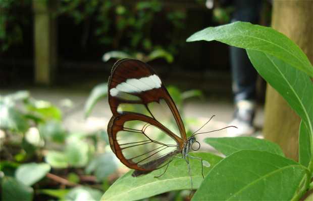 Botanical Garden - Hortus Botanicus