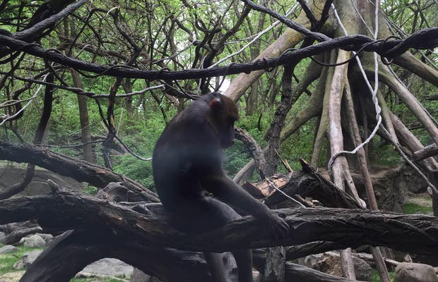 Zoo del Bronx (Bronx Zoo)