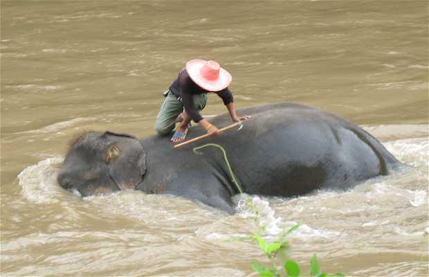 Maeping Elephant Village