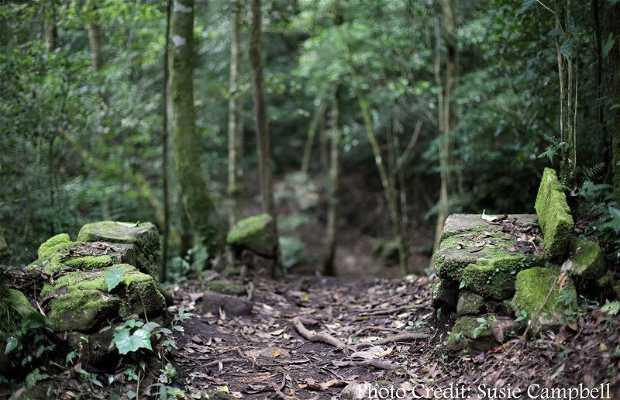 Reserva Privada de Selva Negra