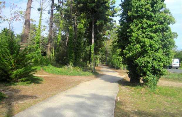 Bosque del Lizay