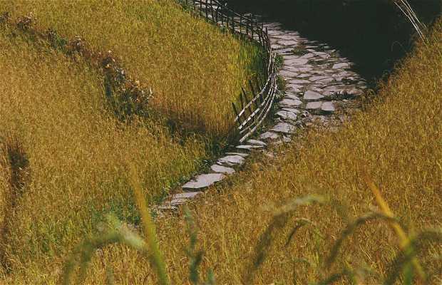 The meadows of Annapurna