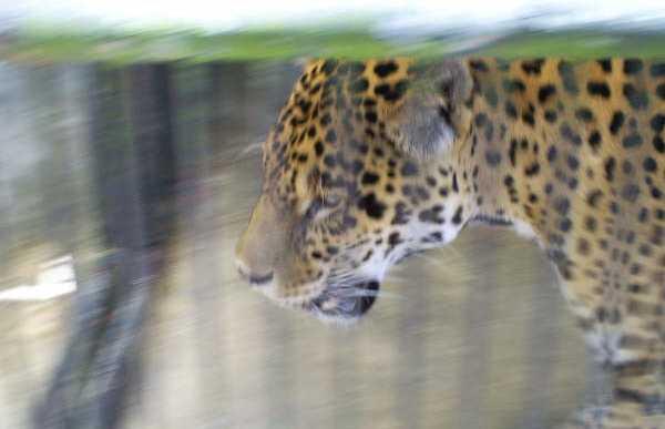 Merida Zoo